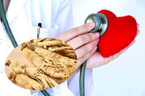 Tác dụng của sâm hoa kỳ đối với bệnh tim mạch