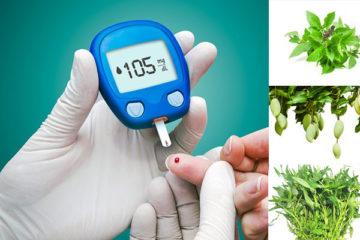 Các cây thuốc nam điều trị tiểu đường hiệu quả